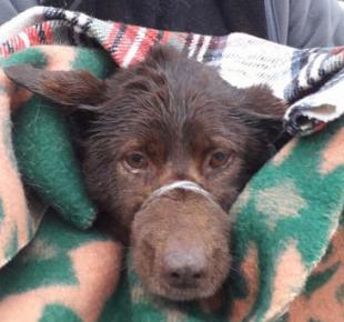 Всі Суми - Отважный герой: в Сумах мужчина вытащил собаку из реки (+ФОТО)