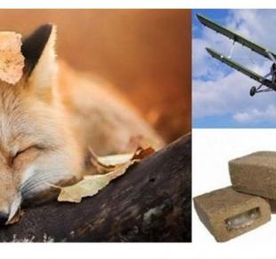 Всі Суми - На Сумщині проводитиметься осіння вакцинація диких тварин