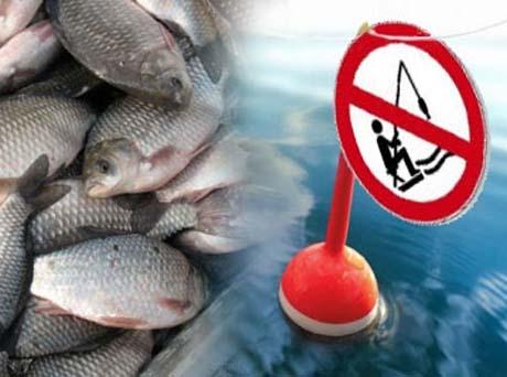 запрет на рыбалку 2017 московская область на карте