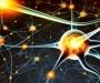 Ученые нашли способ как омолодить наш мозг