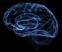 Ученые определили когда наш мозг способен на максимум проявлять работоспособность