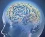 Ученые создали накопитель памяти, который можно вживить в мозг