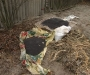В Сумах милиция обнаружила самый большой запас ингредиентов для изготовления наркотических средств (фото)