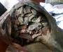 На Сумщине проводник пытался вывезти в Россию 20 килограмм янтаря в пакетах из-под кофе (фото)