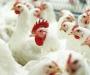 В Сумах и других городах стали больше покупать курятину