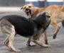 В Сумах увеличилось количество покусанных животными детей