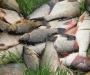 За ловлю сетями рыбакам придется выложить немалую сумму