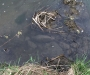 Вместо рыбы сумской рыбак выловил с речки минометную мину