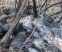 На Сумщине горели торфяники (Фото)