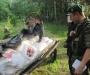 Контрабанда на коне: житель Сумщины пытался на повозке переправить в Россию полтонны мяса