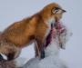 Названы лучшие фотоснимки дикой природы