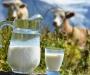 Молоко на Сумщине будет на вес золота?!