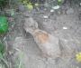 Сумщина. Искал грибы - нашел мину