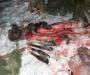 Кровавое браконьерство на Сумщине