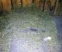 Любитель каннабиса задержан на Сумщине (Фото)