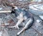 Массовое убийство собак на стройке в Сумах