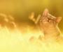 Погода в Сумах и Сумской области в выходные 12-13 августа