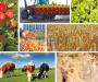 Аграрии Сумщины - одни из лучших в Украине