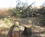 Незаконная вырубка леса остановлена на Сумщине (Фото)