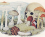В Сумах первые грибные жертвы