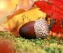 Погода и лунный календарь в Сумах и Сумской области на выходные 14 и 15 октября