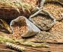 Сумщина - в зерновых лидерах Украины
