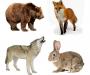 На Сумщине посчитали диких животных