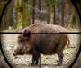 Сумчан с 1 апреля будут штрафовать за охоту