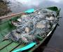 Рыбаки Сумщины нарушаю запрет на ловлю рыбы (Фото)