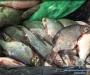 """Незаконных рыботорговцев """"ловят"""" на Сумщине (Фото)"""