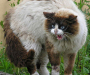Бешеный кот покусал 2 человек на Сумщине