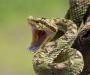На Сумщине змея укусила 16-летнюю девушку