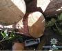Незаконные лесорубы задержаны на Сумщине (Фото)