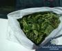 Очередной «ценитель» наркотиков задержан на Сумщине (Фото)