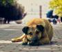 Відкрита Європа: Як вирішують проблеми тварин за кордоном