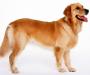 У Сумах відбудеться виставка собак