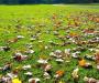 В Сумах предлагают оставлять опавшие листья на газонах