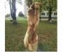 У Сумах презентували виставку «Роздумів» втілених в дерево, метал, камінь