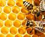 На Сумщині навчають бджолярству на президентській пасіці