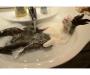 В Сумах отключили воду: кто сидит с сухими кранами