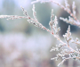 В Україні з 11 по 17 січня стане прохолодніше: зима починає набирати оберти