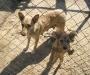 Поддержи ближнего: в Сумах найдут хозяев бездомным животным