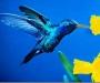 Колибри всегда находятся на пороге смерти от истощения