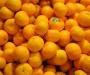 Под мухой: украинцам хотели подсунуть мандарины с опасной заразой